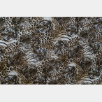 Self-adhesive Foil Tiger Skinr 152cm X 1m